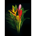 Exotic Bouquets - Tropical Mix 1 Bouquet