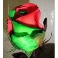 Tinted Roses - Red, Green