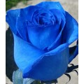Tinted Roses - Blue