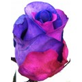 Tinted Roses - Blue, Pink, Purple