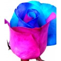 Tinted Roses - Light Blue, Pink, Purple