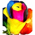 Tinted Roses - Yellow, Blue, Pink, Orange