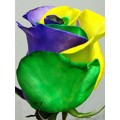 Tinted Roses - Yellow, Green, Purple