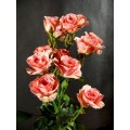 Spray Roses - Gracia