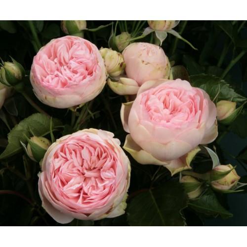 Garden Roses Bridal Piano