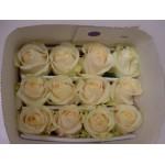 Roses (Standard)