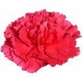 Carnations - Bizet